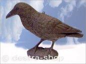 Rabe für balkon gegen Tauben